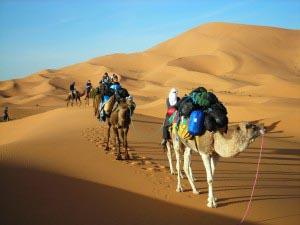 Night Sahara Dunes